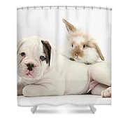 Boxer Puppy And Young Fluffy Rabbit Shower Curtain by Mark Taylor