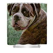 Boxer Smiles Shower Curtain by DigiArt Diaries by Vicky B Fuller
