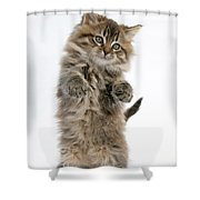 Boxing Kitten Shower Curtain