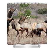 Boxing Match Shower Curtain