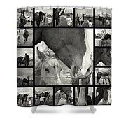 Boy Meets Horse Shower Curtain
