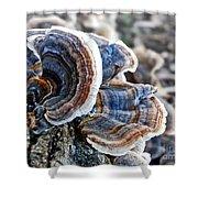 Bracket Fungi - Fungus Shower Curtain