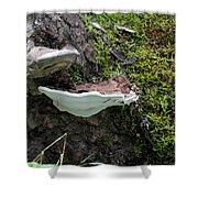 Bracket Fungus Shower Curtain