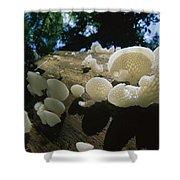 Bracket Fungus Favolus Brasiliensis Shower Curtain