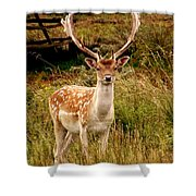 Wildlife Fallow Deer Stag Shower Curtain