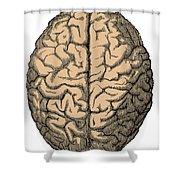 Brain Shower Curtain
