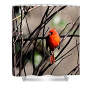 Brambles Shower Curtain