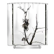 Branch Of Dried Out Flowers. Shower Curtain