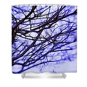 Branches In Winter Shower Curtain