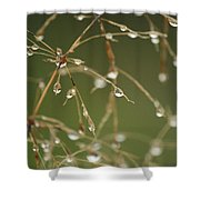 Branches Of Dew Shower Curtain