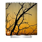 Branches Reaching The Sunset Shower Curtain