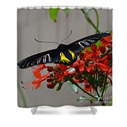 Brazilian Moth Shower Curtain