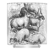 Breeds Of Sheep, 1841 Shower Curtain