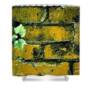 Brick Ivy Shower Curtain
