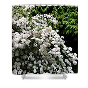 Bridal Veil Blossoms Shower Curtain