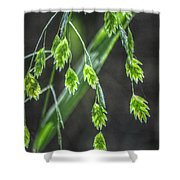 Bright Baby Leaves  Shower Curtain