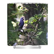 Bright Blue Shower Curtain
