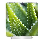Bright Green Succulent Shower Curtain