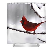 Bright In The Snow - Cardinal Shower Curtain