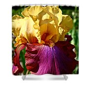 Bright Iris Shower Curtain
