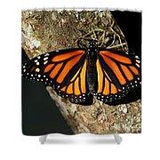 Bright Orange Monarch Butterfly Shower Curtain