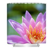 Bright Pink Water Lily II Shower Curtain
