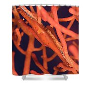 Bright Red Cowrie On Coral, Papua New Shower Curtain