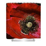 Bright Red Poppy Shower Curtain