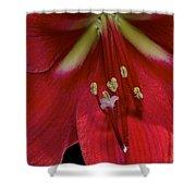 Bright Rose Amaryllis Shower Curtain