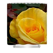 Bright Yellow Rose Shower Curtain