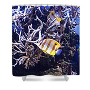 Brilliant Fish Aquarium Shower Curtain