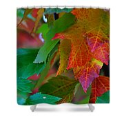 Brilliant Red Maple Leaves Shower Curtain