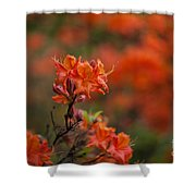 Brilliantly Rouge Shower Curtain