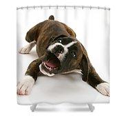 Brindle Boxer Pup Shower Curtain