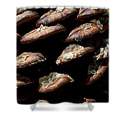 Bristle Pine Cone Shower Curtain