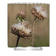 Bristle Thistle - Carduus Nutans Shower Curtain