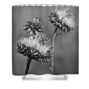 Bristle Thistle In Black And White Shower Curtain