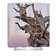 Bristlecone Pine - Early Morning - 1 Shower Curtain