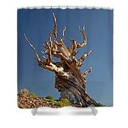 Bristlecone Pine Shower Curtain