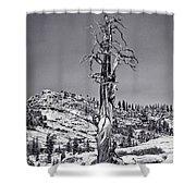 Bristlecone Pine - High Sierra Shower Curtain