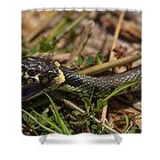 British Grass Snake Shower Curtain