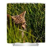 British Wild Cat Shower Curtain