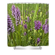 Broad-leaved Marsh Orchid Dactylorhiza Shower Curtain