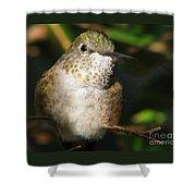 Broadbill Hummingbird Shower Curtain