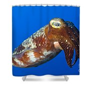 Broadclub Cuttlefish, Papua New Guinea Shower Curtain by Steve Jones