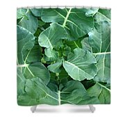 Broccoli Floret Forming Shower Curtain