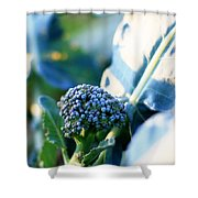 Broccoli Sprout Shower Curtain