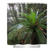 Bromeliad And Tree Ferns Colombia Shower Curtain