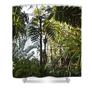Bromeliad And Tree Ferns  Shower Curtain by Cyril Ruoso