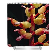 Bromeliad Detail Brazil Shower Curtain